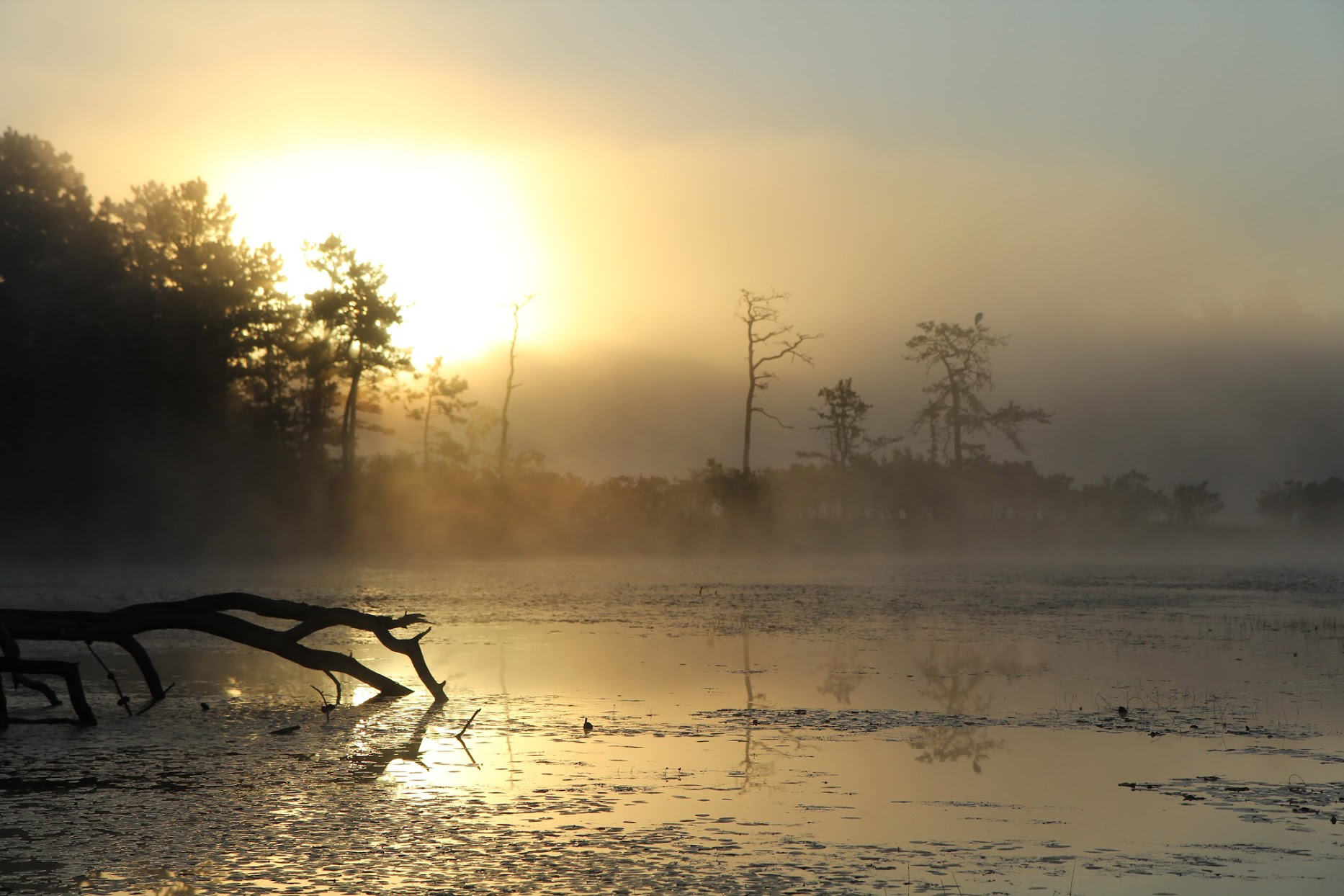 sunrise in Myles Standish State Forest--Taken by Steve Nikola on 8/25/2013 at Three Cornered Pond.