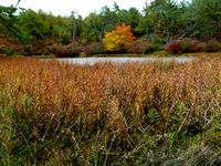 Fall scene from Camp Squanto in Myles Standish State Forest