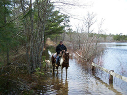 Myles Standish equestrian man and horse on flooded path